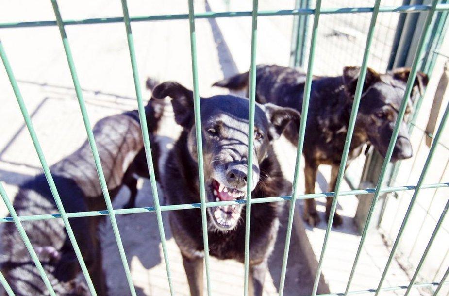 """Gyvūnų prieglaudos """"SOS gyvūnai"""" globotiniai"""