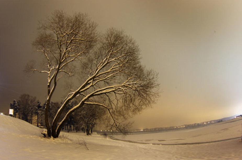 Kauno marių pakrantė