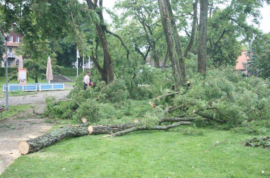 Išversti medžiai greitai buvo šalinami.