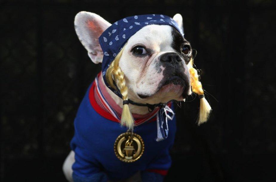 Prancūzų buldogė Lula pasipuošė JAV olimpinės rinktinės kostiumu.