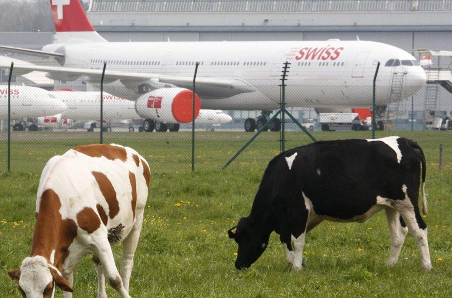 """Swiss International Airlines"" lėktuvas"