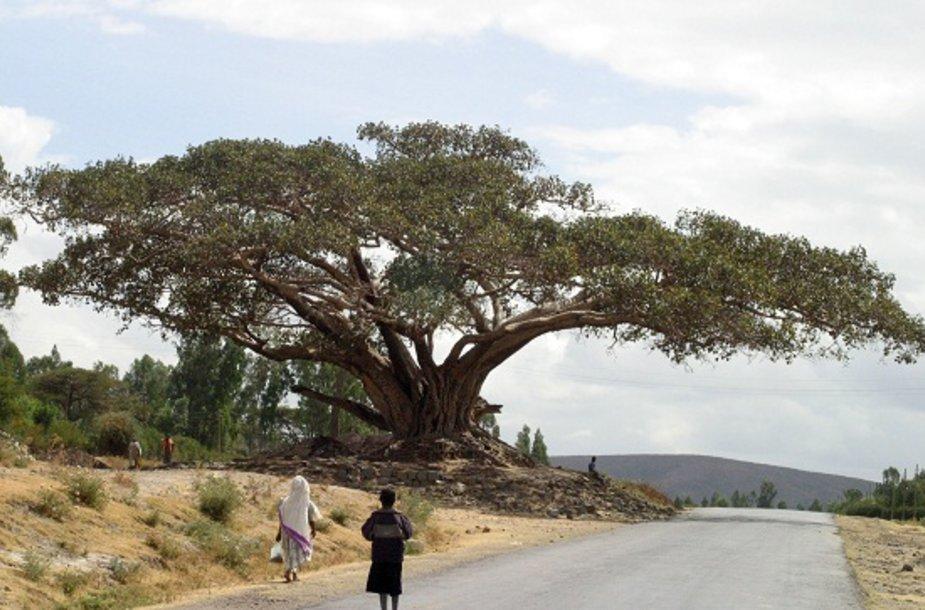 Gyvenimas Etiopijoje
