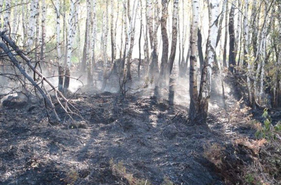 Išdegęs miškas.