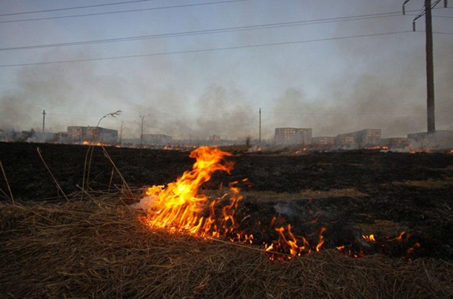 Deganti pernykštė žolė