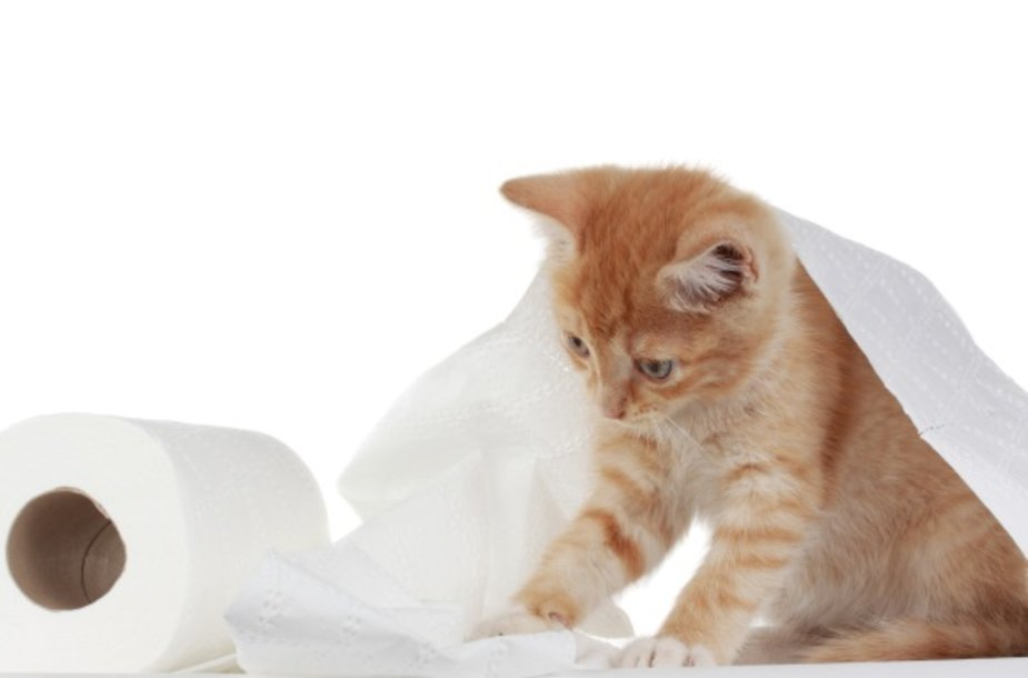 Jei nutarsite buityje išbandyti kačių kraiką, su šių gyvųnų turinčiais draugais pasikonsultuokite, kuris iš pas mus parduodamų geriausias.