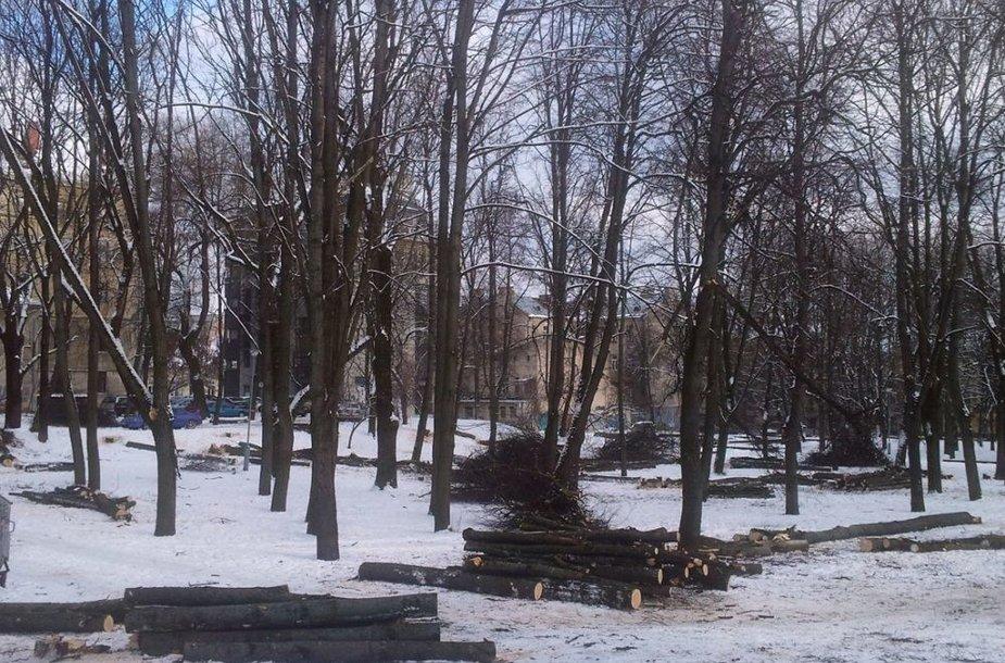 Kertami medžiai Reformatų skvere