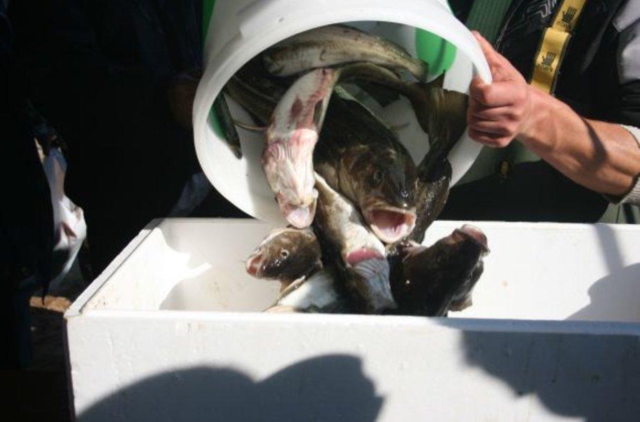 Iš laivų parduodama žuvis labai populiari, tačiau norinčių ja prekiauti neatsiranda.