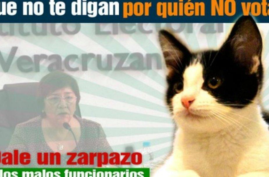 Мэром города в Мексике может стать кот