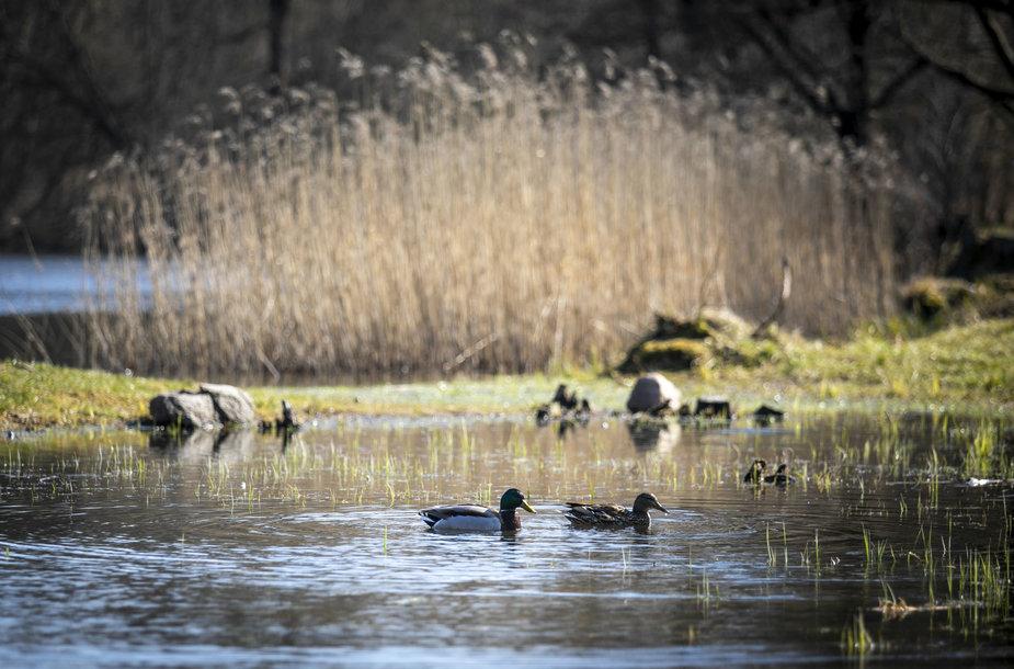 Karantinas pavasariui nerūpi: gamta bunda lepinama saulės