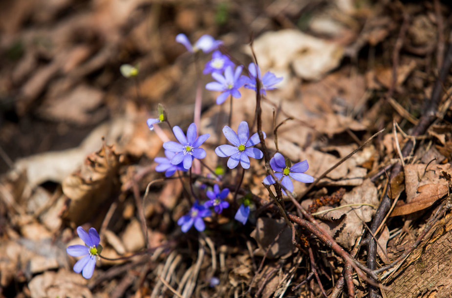 Bundantis pavasaris