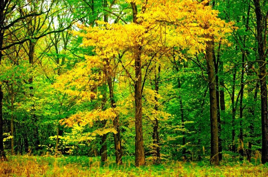 Medžiai