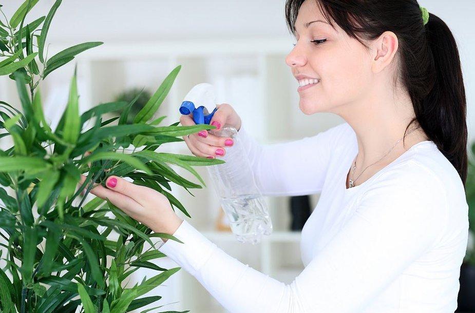 Augalų priežiūra