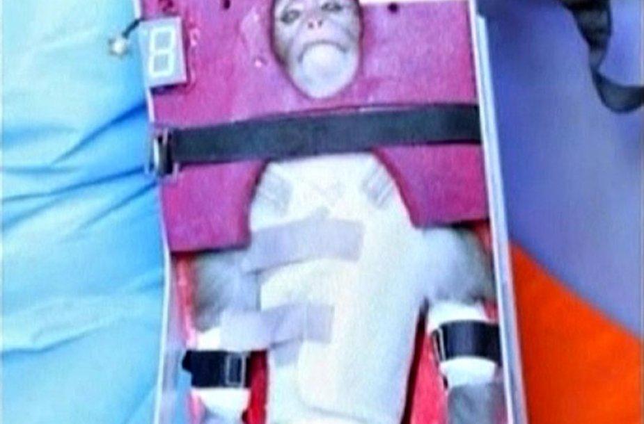 Iranas į kosmosą išsiuntė beždžionę