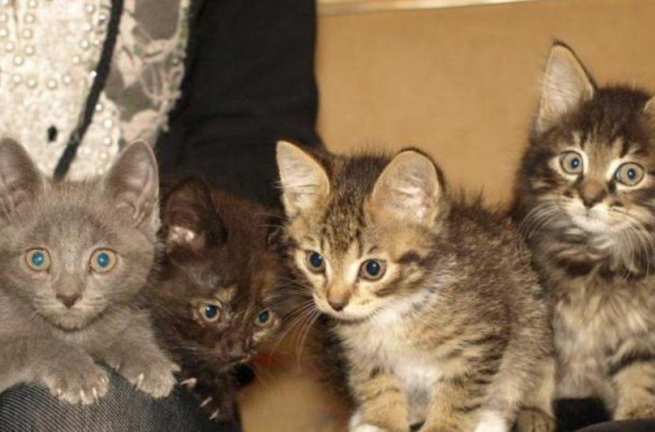 Keturi kačiukai prašo pagalbos