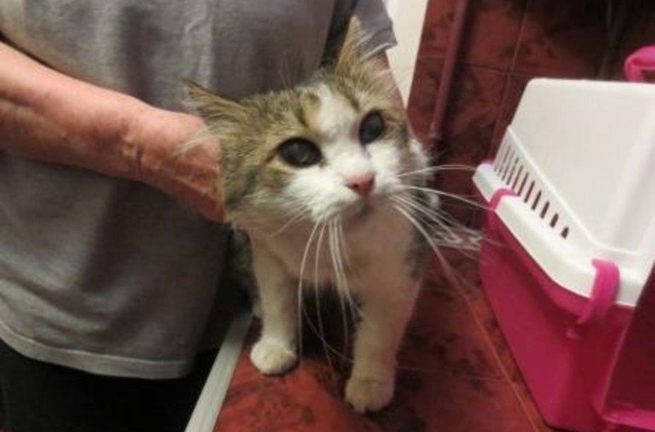 Reikalinga pagalba aklam katinėliui Aiko