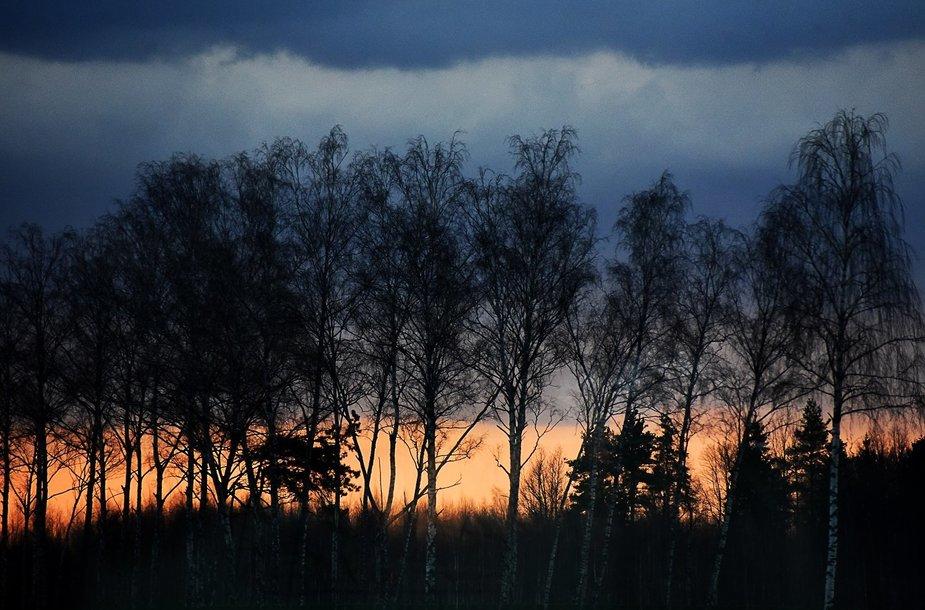 Pavasarinės gamtos grožis Vytauto Šauklio kadruose