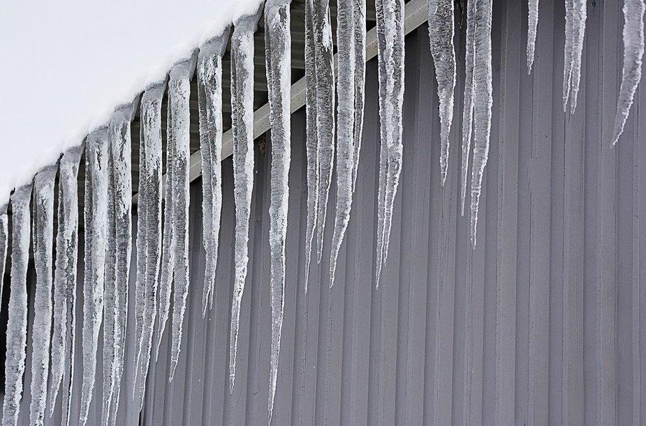 Žiemos vaizdai Vytauto Šauklio fotografijose