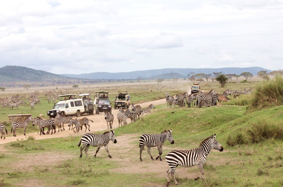 Rytinis safaris