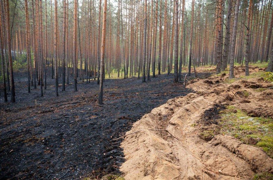 Gaisras Nemenčinės miške