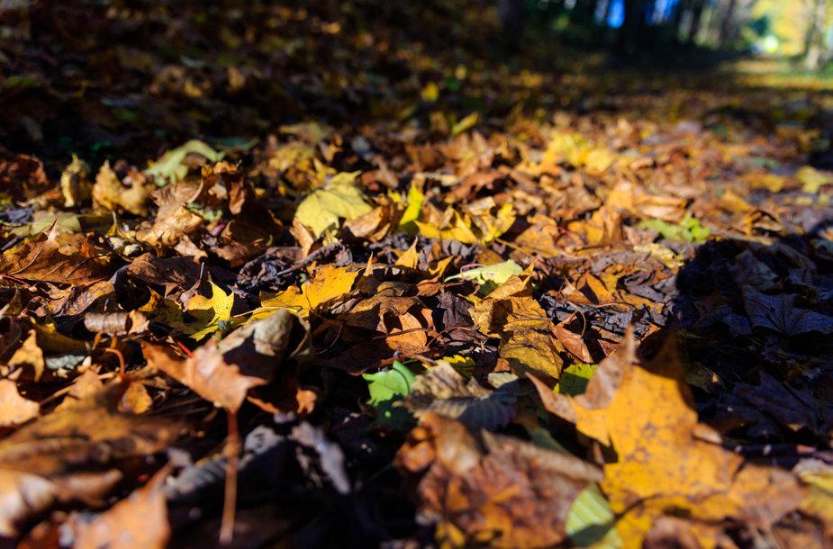 Verkių parko medžiai numetė rudeninius lapus
