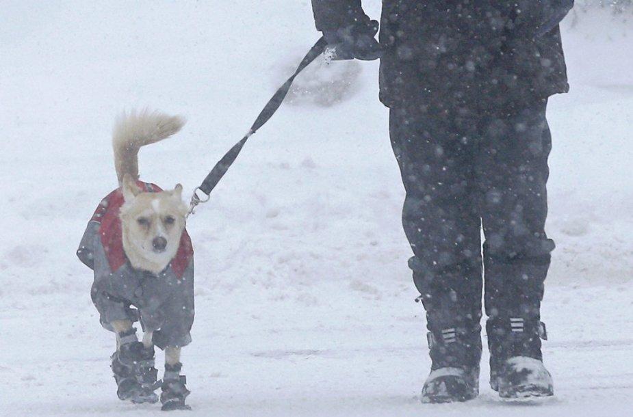 Per pūgą vedžiojamas aprengtas šuo