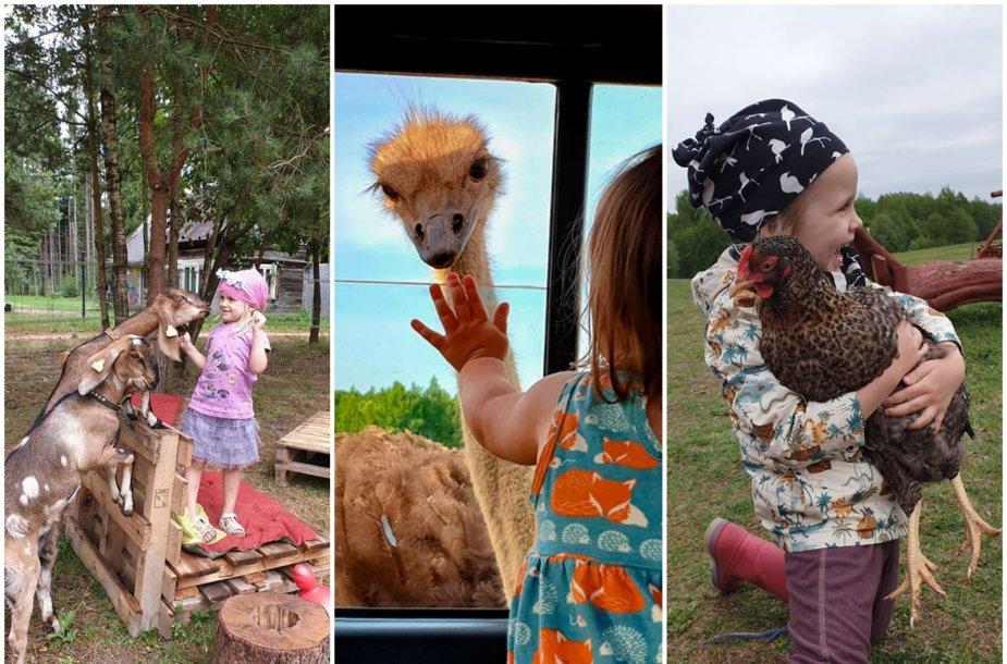 Vaikams labiausiai patinkantys gyvūnų ūkiai Lietuvoje