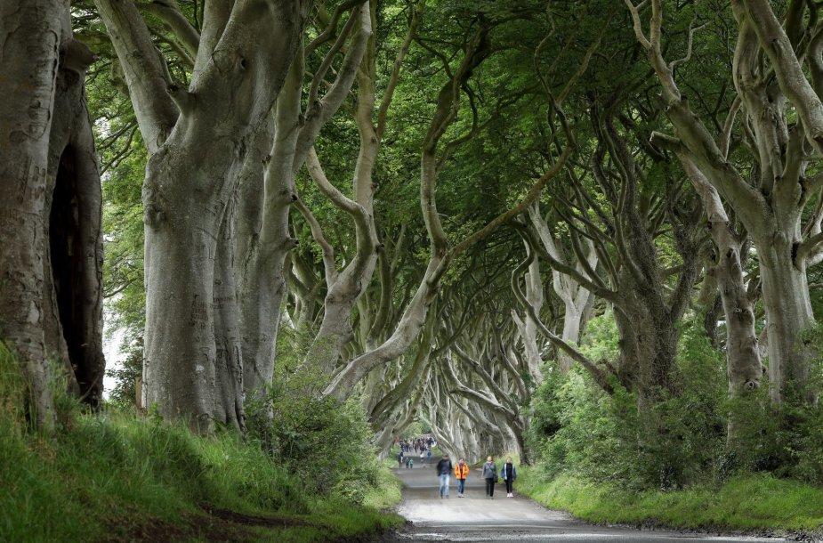 Medžių alėja Airijoje