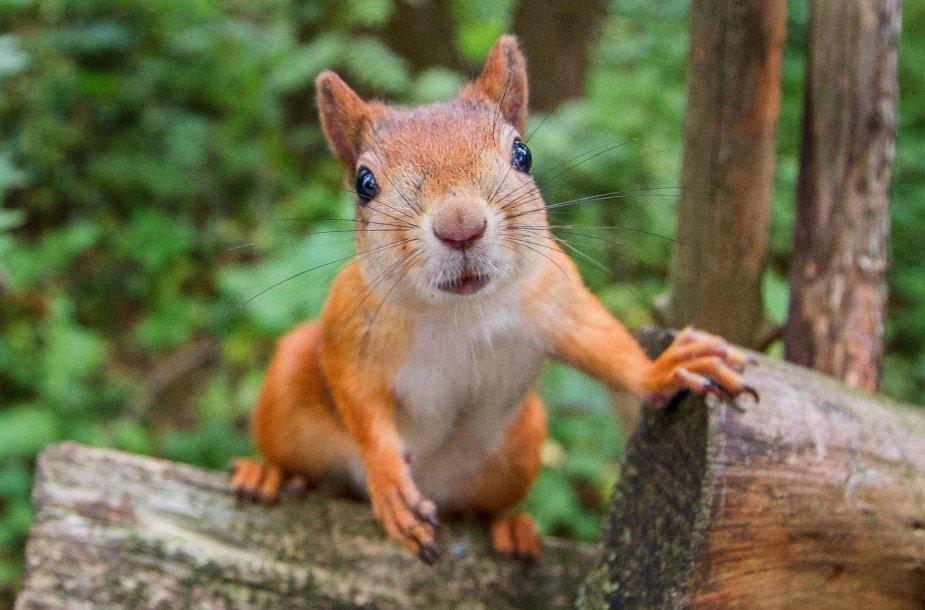 Smalsi voveraitė