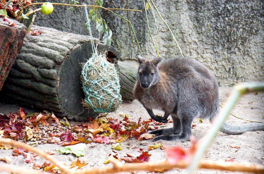Zoologijos sodas prašo lankytojų paaukoti jiems nebereikalingų daiktų