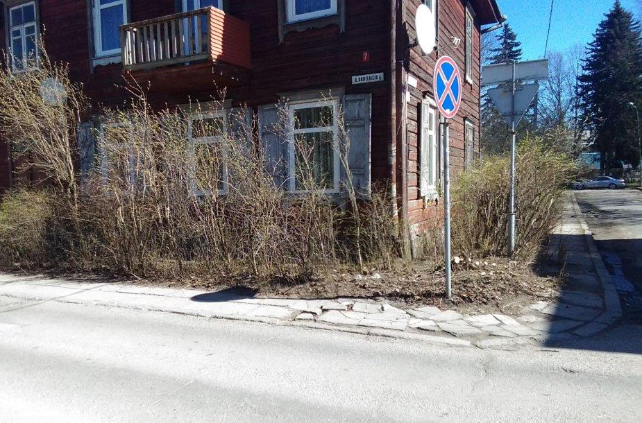 K.Donelaičio ir Beržyno gatvių kampe iškirstos alyvos