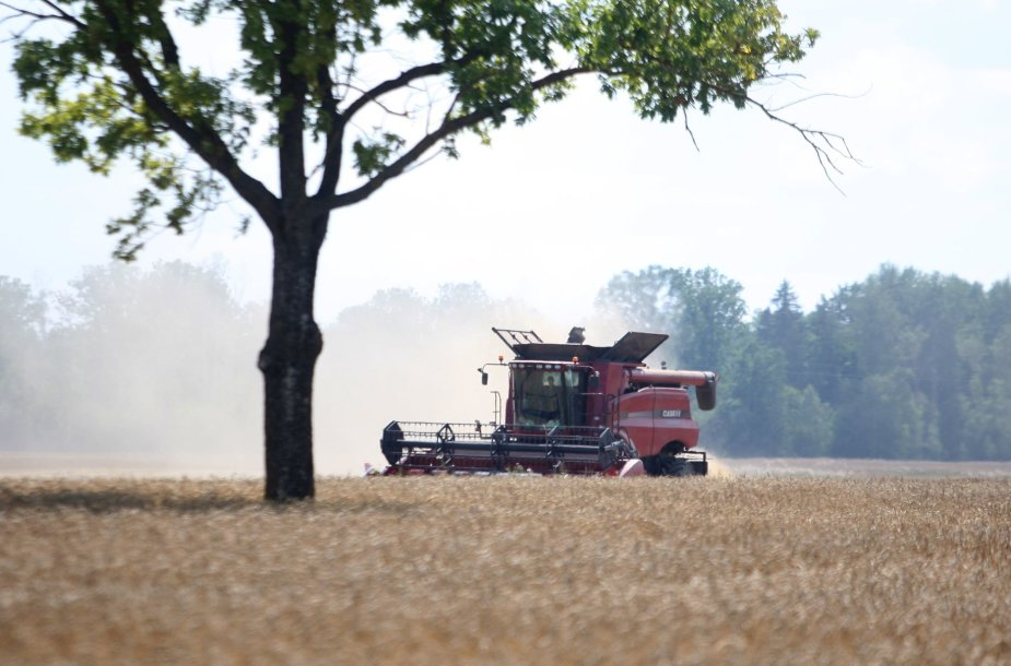 Derlius dėl sausros neabejotinai bus mažesnis