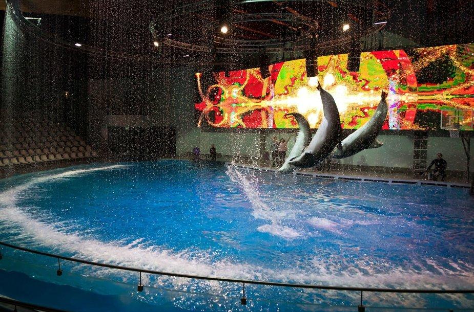 Lietuvos jūrų muziejaus delfinariume – sniego pasaka su delfinais.
