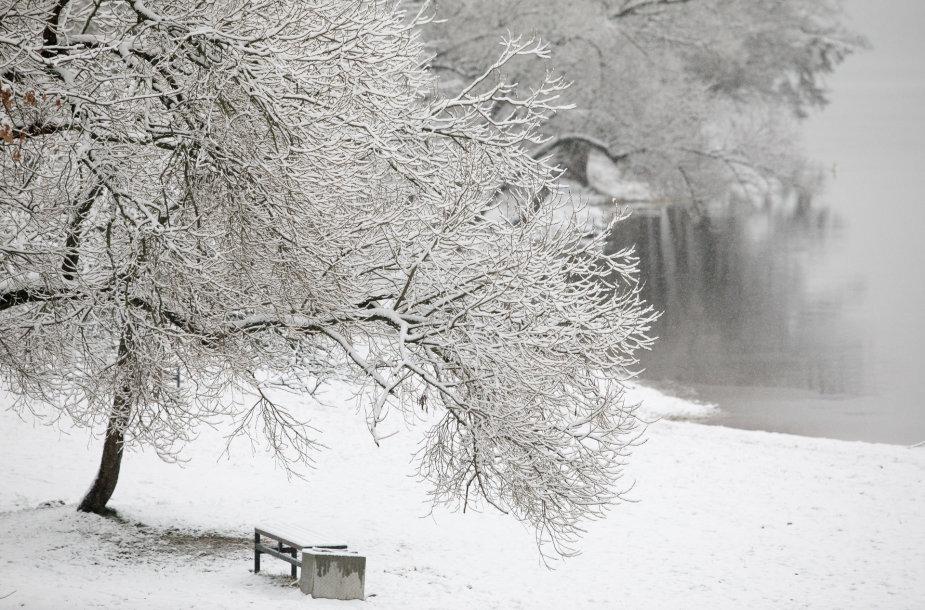 Sniegas nuklojo Kauno marių pakrantę