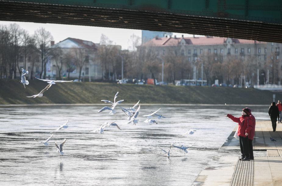 Pavasariškas oras Vilniuje