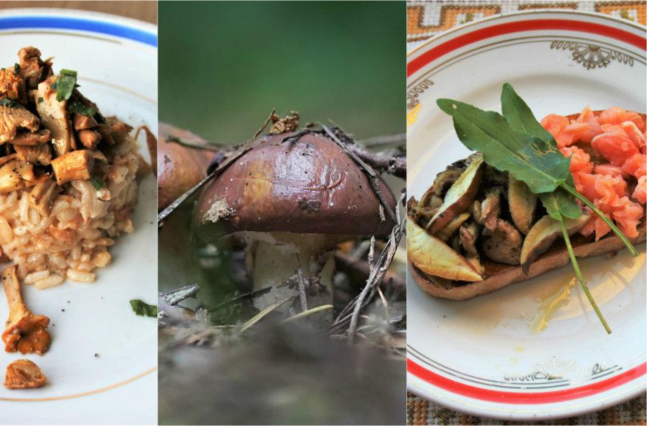 Jurgos ir Pauliaus Jurkevičių ruošti patiekalai su grybais