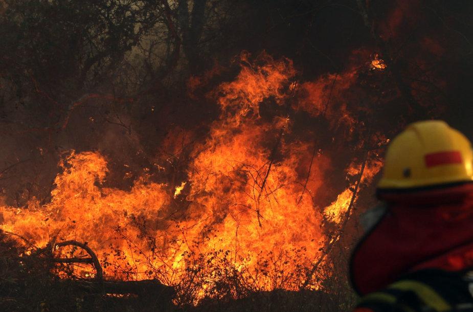 Miško gaisras Bolivijoje