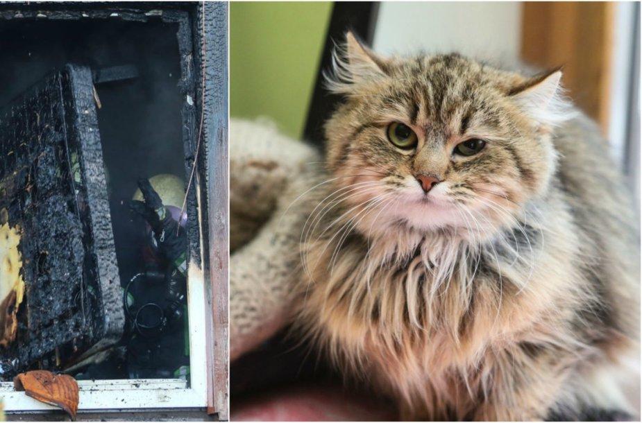 Kaune katės sukėlė gaisrą