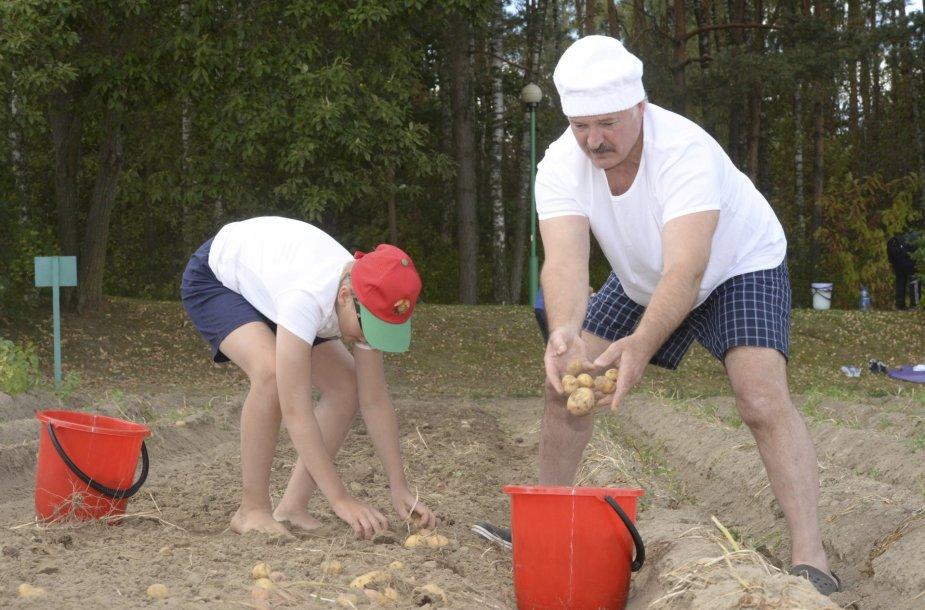 Aliaksandro Lukašenkos sūnus Kolia su tėčiu kasa bulves