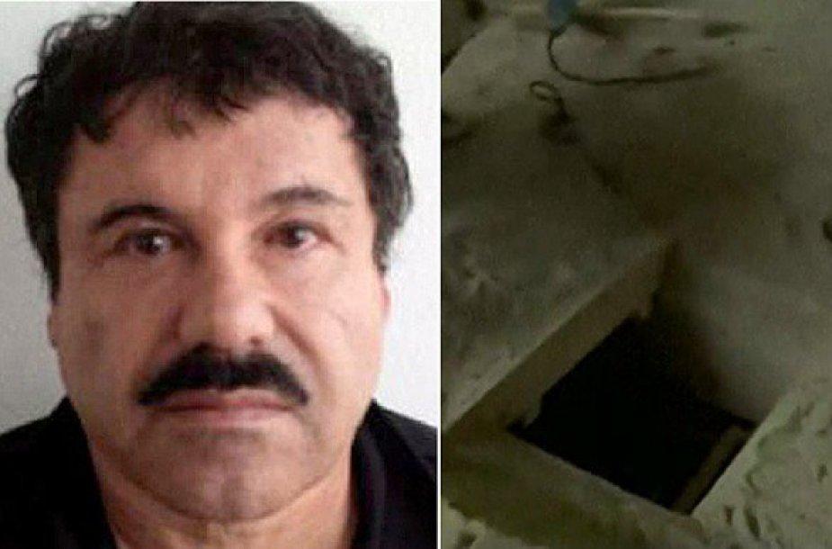 Joaquinas Guzmanas, El Chapo