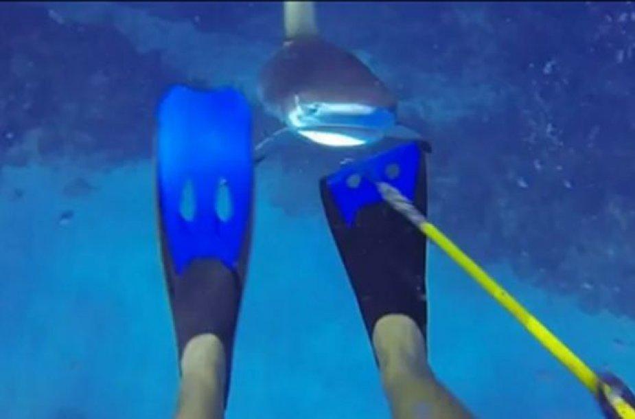 Ryklys bando užpulti narą