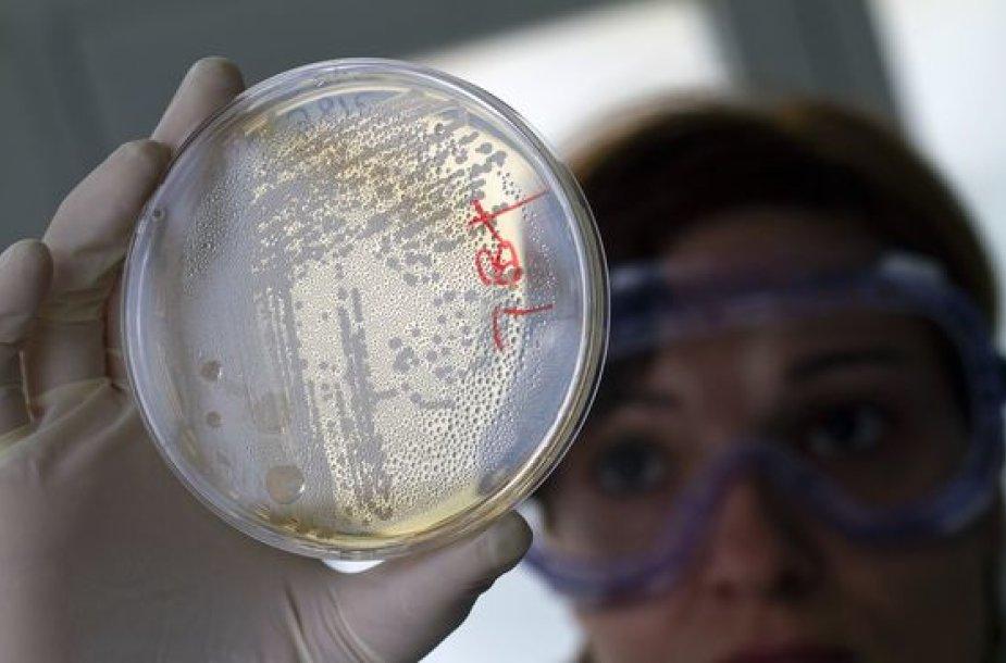 E.coli sukelta žarnyno infekcija