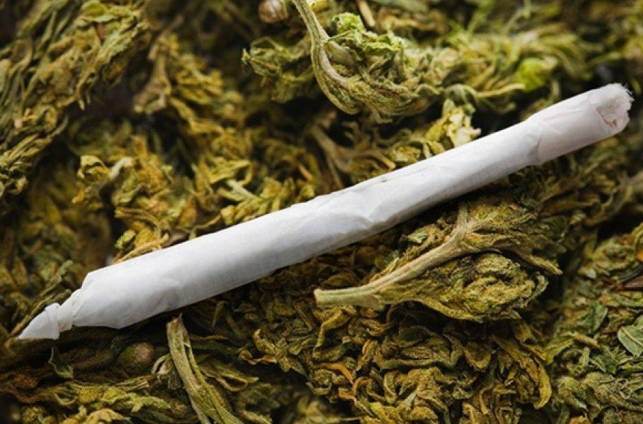 Marihuanos suktinė