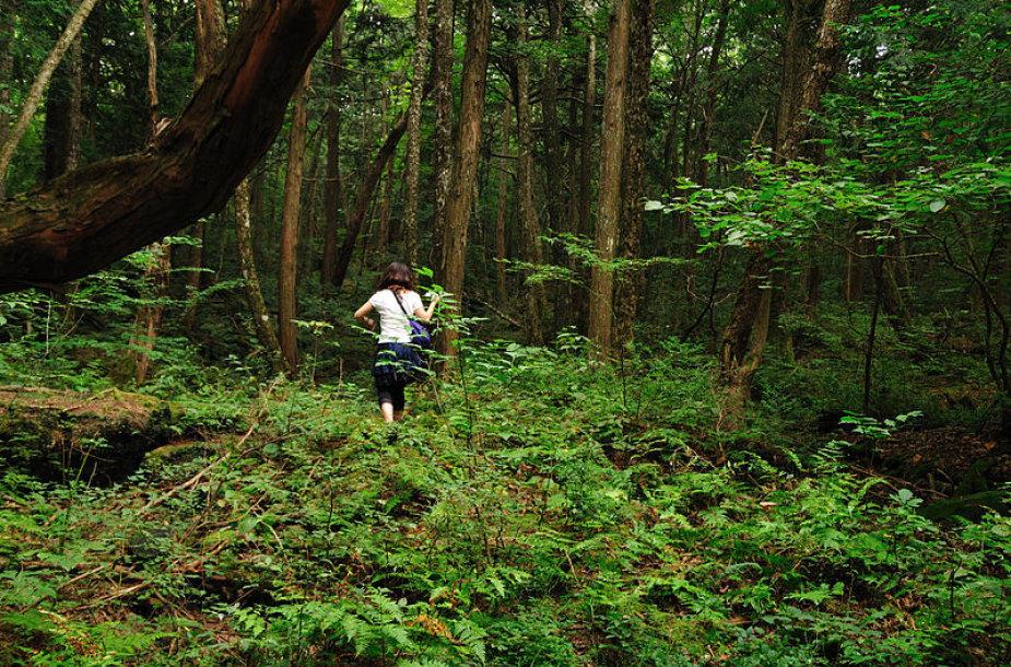 Aokigaharos miškas (Liūdnųjų medžių jūra)