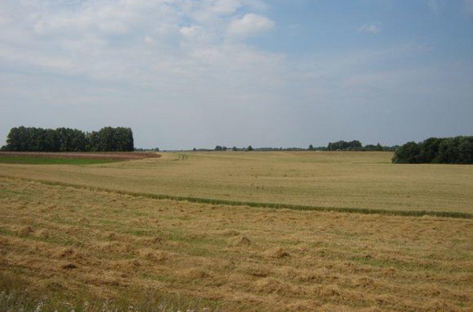 Žemės ūkis