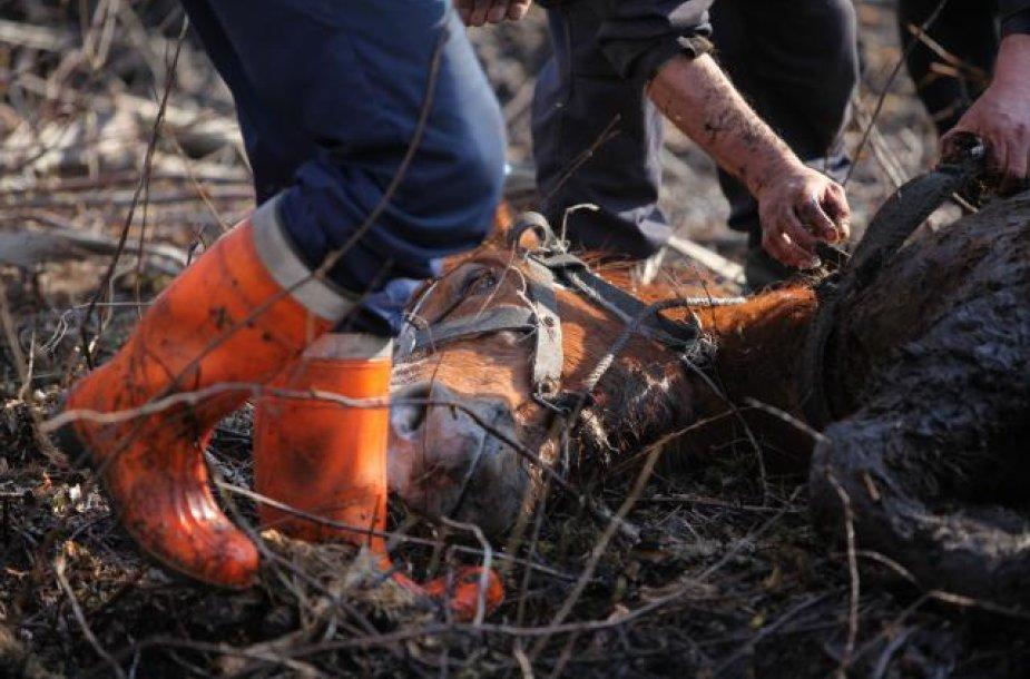 Kumelės gelbėjimo operacija