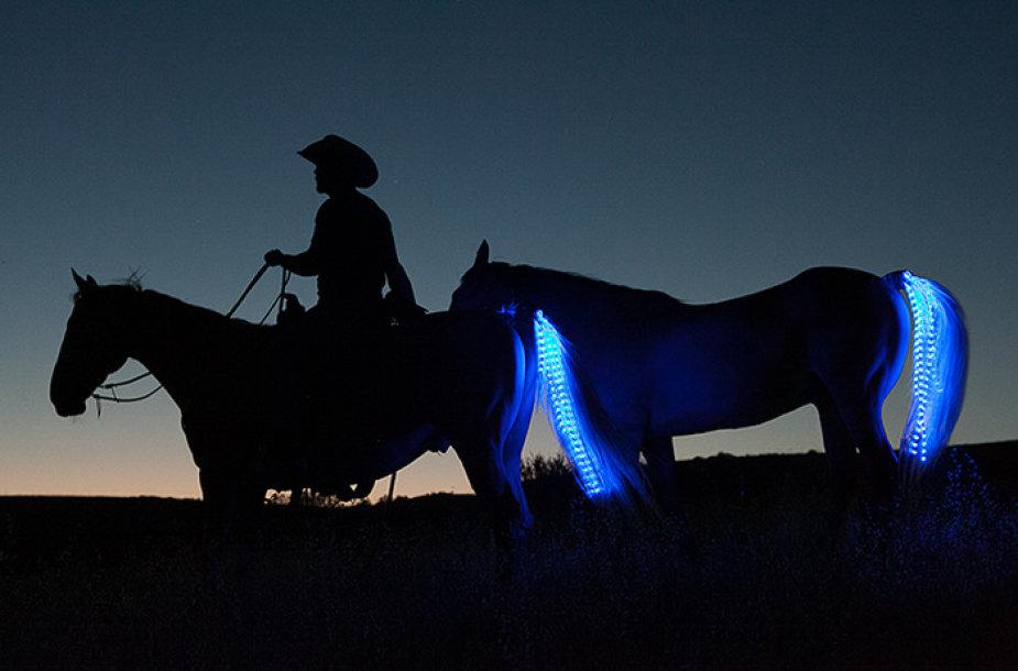 Žirgai su šviečiančiomis uodegomis