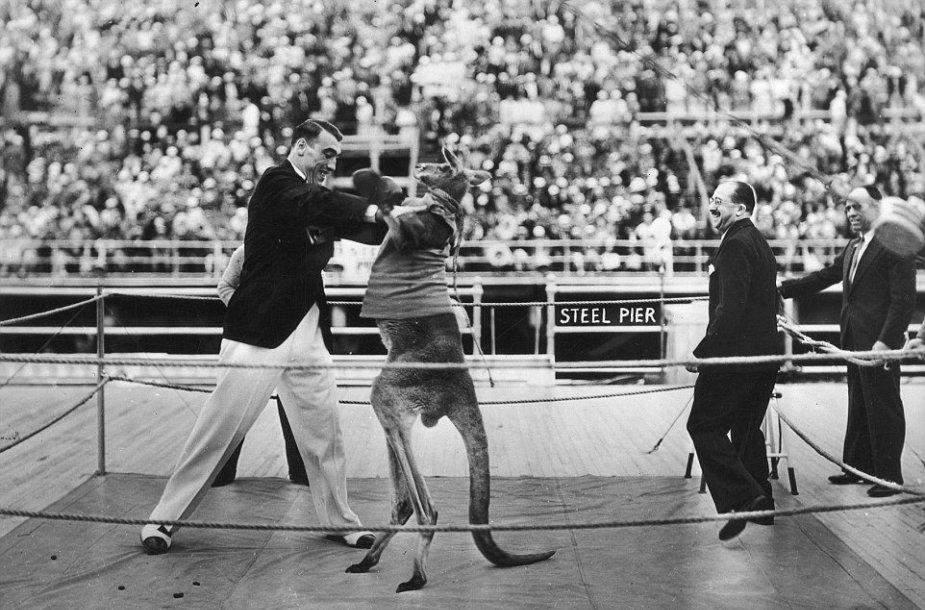 Sunkiasvoris čempionas Primo Carnera ir kengūra Atlantik Sityje, 1933 m.