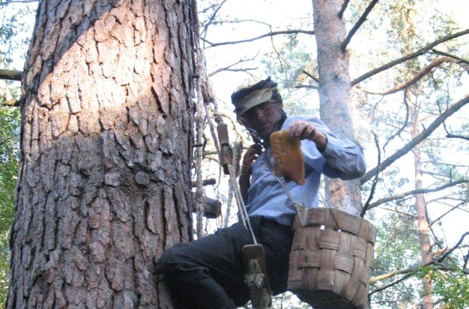 Drevinė bitininkystė Dzūkijos nac. parke