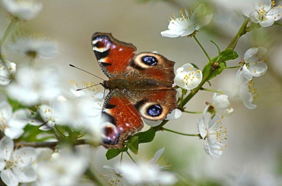 Pavasarinių žiedų ir gamtos grožis