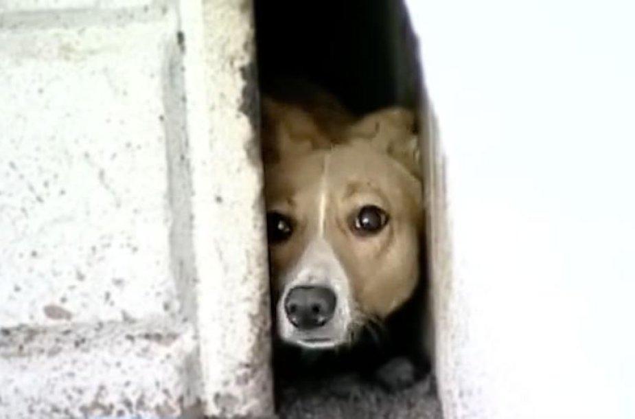 Tarp dviejų pastatų įkalintas šuo